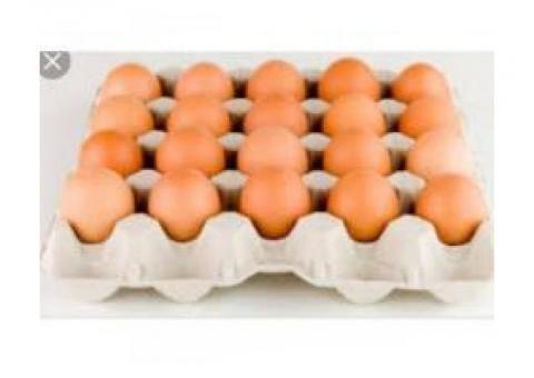 Venta de huevo de gallina